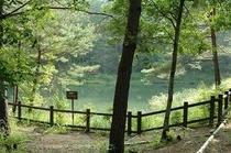 遊歩道 池