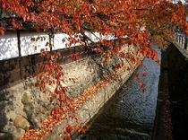 秋の江名古川