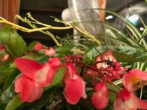 ダイニング 花