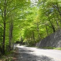 新緑の軽井沢