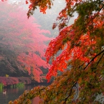 軽井沢 秋の風景2