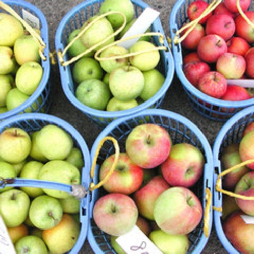 *季節のフルーツ(りんご)
