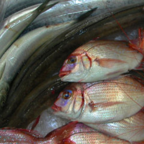 *日本海で水揚げされる新鮮な鮮魚♪(イメージ)