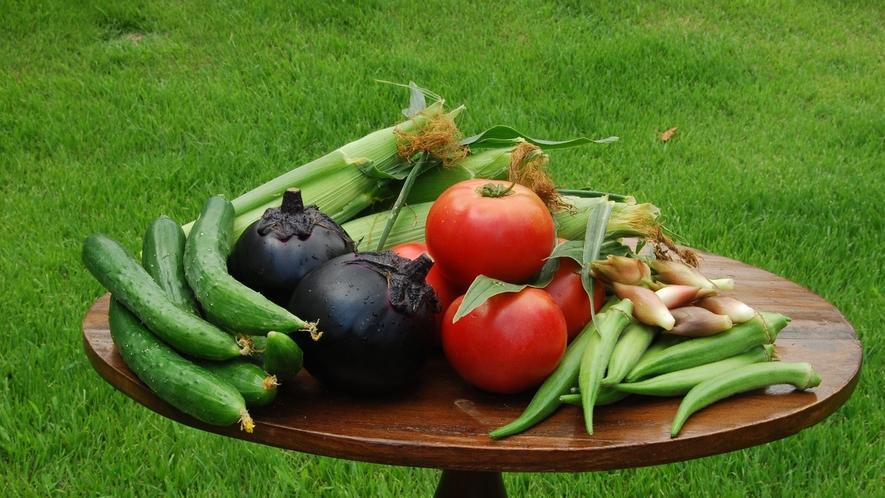 美味しい季節ごとのお野菜。春夏秋冬、四季の瑞々しさを感じることができます。