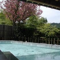 桜の咲く露天風呂