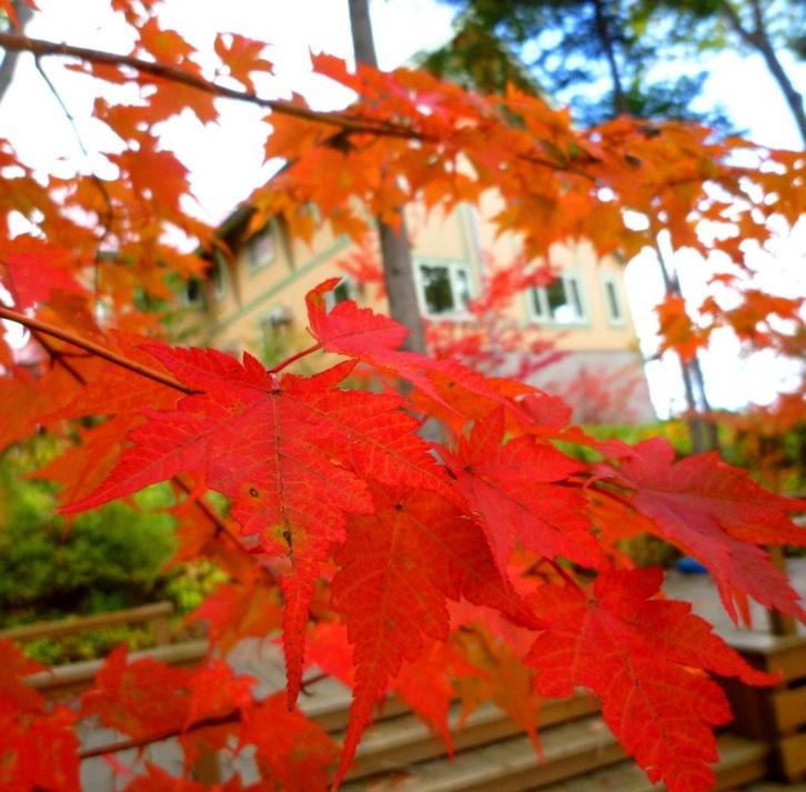 紅葉の中でテラスでゆっくり