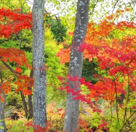 秋のコントラスト