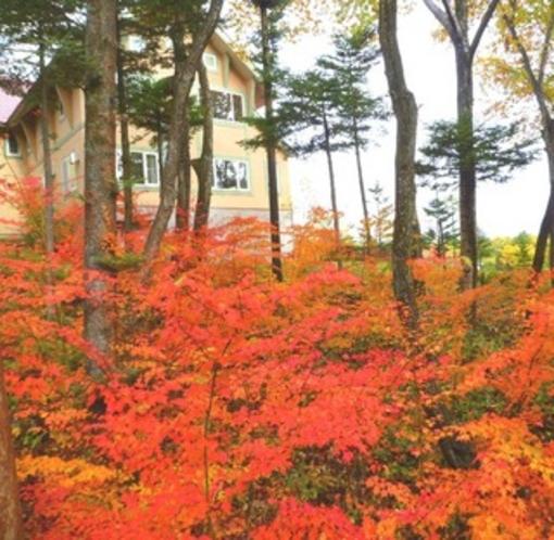 テラスからの素晴らしい紅葉と外観