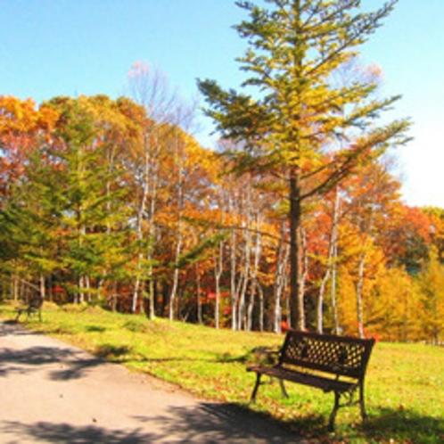 秋の紅葉-庭ベンチにて