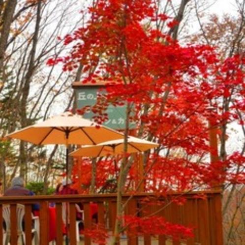 秋のオープンテラス