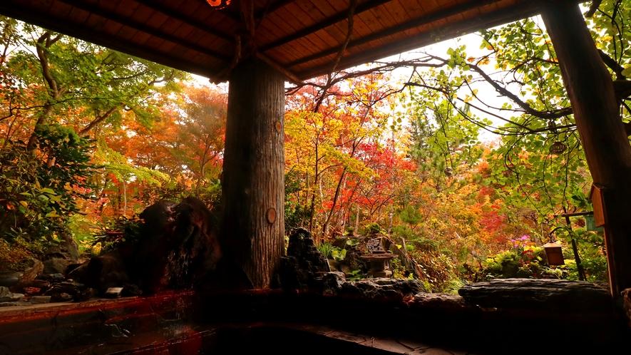 【美麗の湯 露天風呂】秋は色鮮やかな紅葉露天♪大自然の露天風呂をお楽しみください