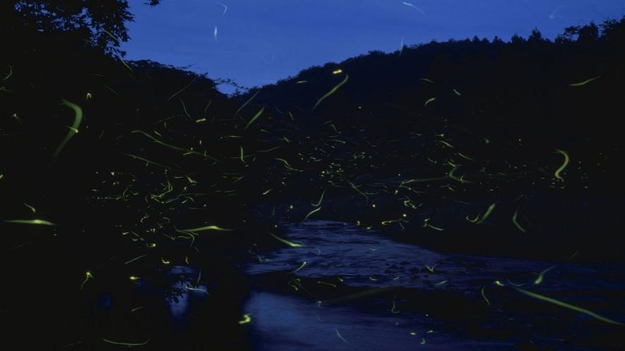 三徳川沿いでは6月中旬にはホタルがご覧いただけます♪