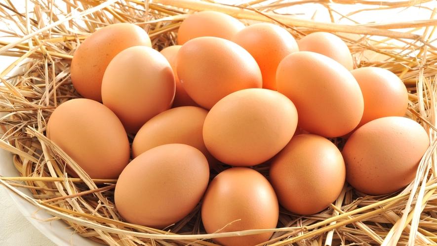 福岡県鞍手町産の新鮮な卵「味宝卵(みほうらん)」