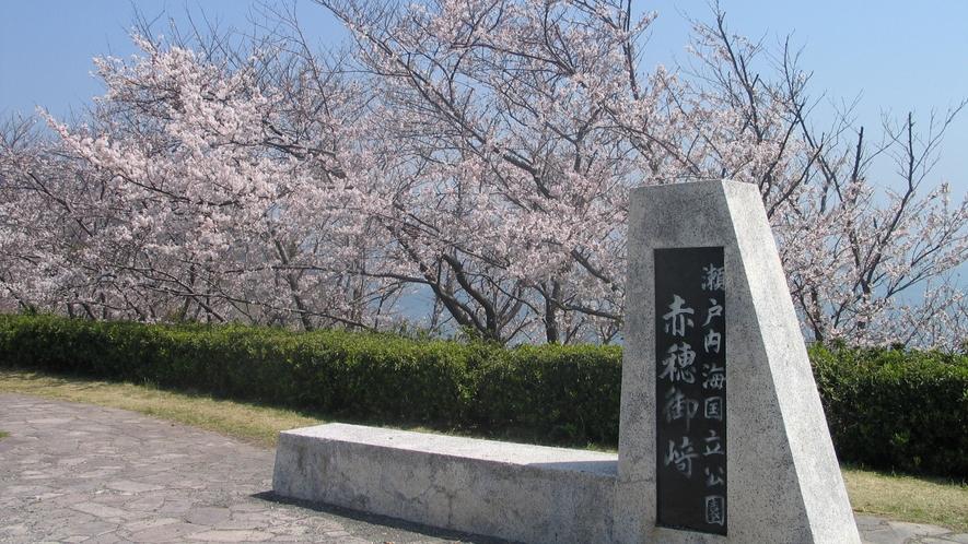 赤穂御崎の桜毎年、さくら祭りも開催されます。