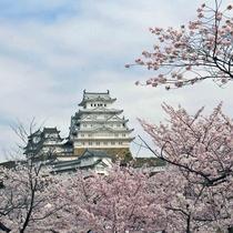 春には美しい桜とのコントラストがみられる姫路城