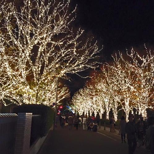 冬の観光名所★光輝くロームのイルミネーション