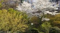 *【季節の花々】3月上旬より「サンシュ」「土佐水木」をご覧いただけます。