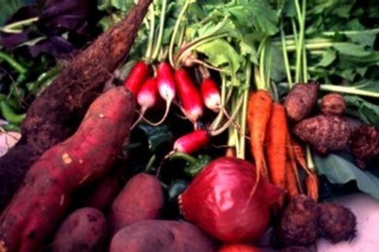 有機野菜の品々