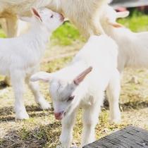 3匹の子ヤギ