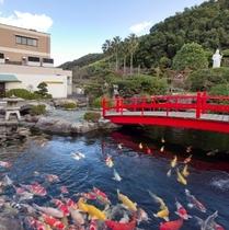 庭園 鯉2