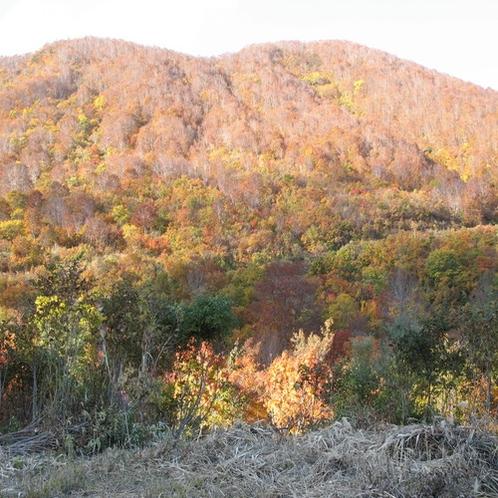 秋◇飯山の紅葉