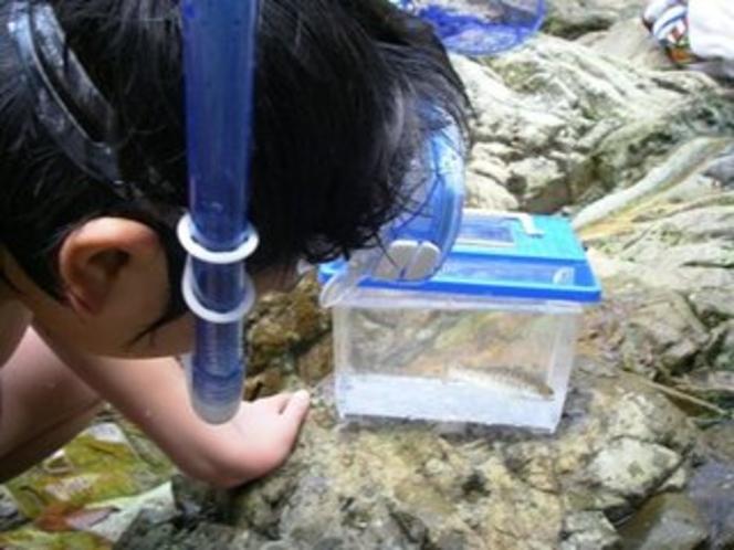 川遊びで捕まえた小さなヤマメ