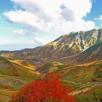 立山アルペンルート紅葉