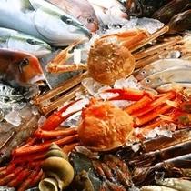 富山湾の魚たち