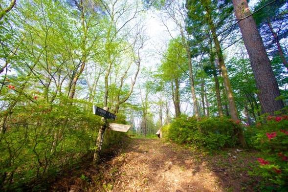 【森林セラピー】朝ドラで話題の街「登米」・リフレッシュ効果のあるふれあいの森で散策・朝食付き