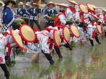 «世界遺産»壬生の花田植え