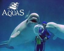 アクアス(水族館)に白イルカを観に行こう!