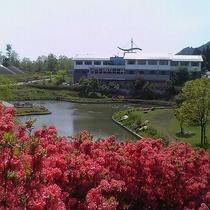 【園内の花】4月から5月にかけてツツジが満開