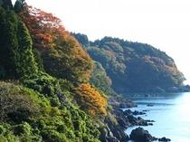 三陸秋の紅葉