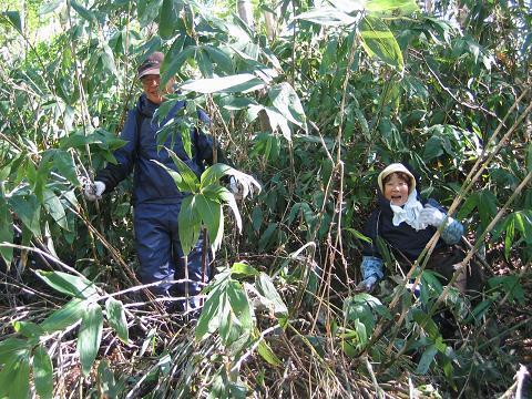 山菜採り(竹の子)