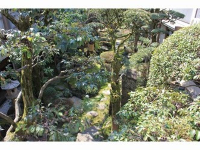 常緑のお庭2