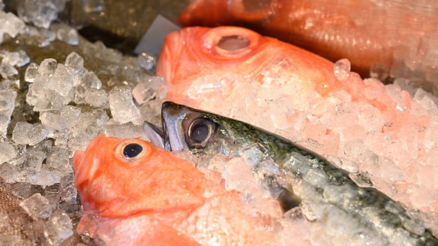 鮮魚ネタケース