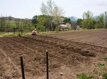 自家菜園 じゃがいも植え込み