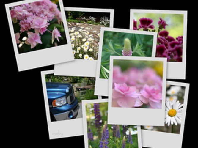 春〜初夏 庭のお花