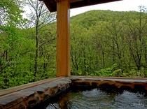 「ヤマセミの渓流」風呂 新緑