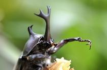 夏は昆虫採集も人気です。