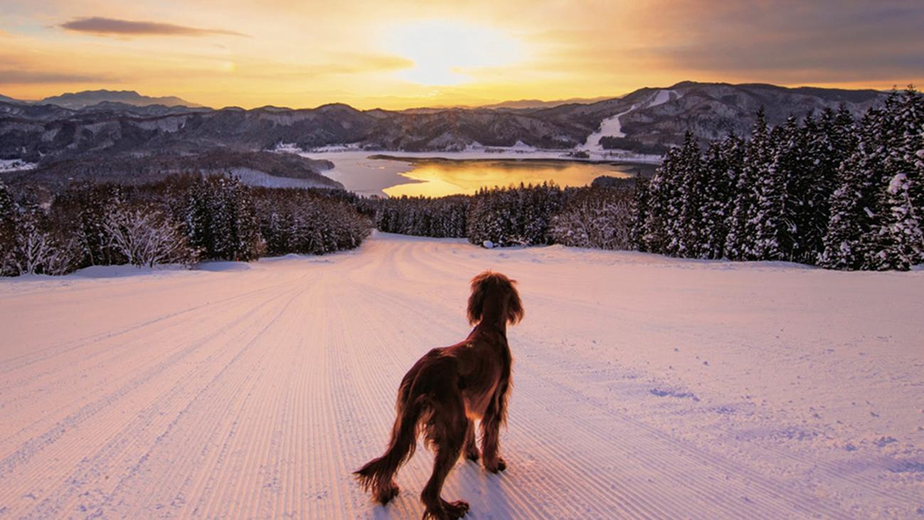 **【周辺観光_白馬さのさか】長野市や松本市からアクセスしやすいスキー場です。のびのび滑りたい方に◎
