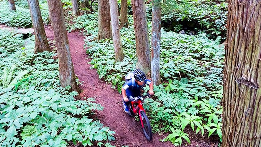 **【マウンテンバイク】Hakuba47と岩岳には、初級者から楽しめるコースが用意されています。