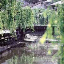 温泉街の景色(大谿川と柳並木)