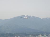 ドンデン山の白いキツネは春の便り(5月頃