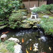 中庭の池にはコイが泳いでいます♪