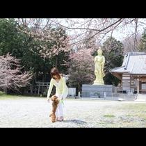 ◆【観音寺】