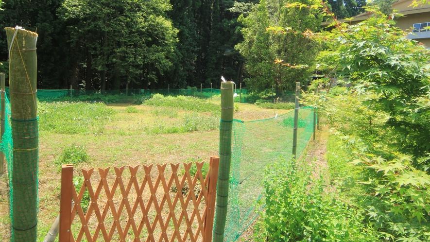 ◆【ドッグラン】上州苑の庭にはミニドッグランがございます。気持ちよい緑の中で、わんこを思いっきり走ら