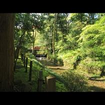 ◆【周辺観光-弥彦神社-】