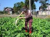 自家菜園の採れたて野菜