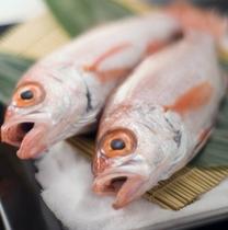 脂ののった高級魚のどぐろ(赤ムツ)